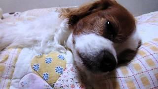 寝ぼけて夢の中で走る(?)チャリ男さん。さらに1分30秒あたりからの反応...