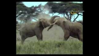 Kenya Safari Vacations, Tours, Videos, Custom Packages