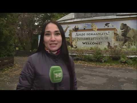 Новости Татарстана 10/10/19 ТНВ