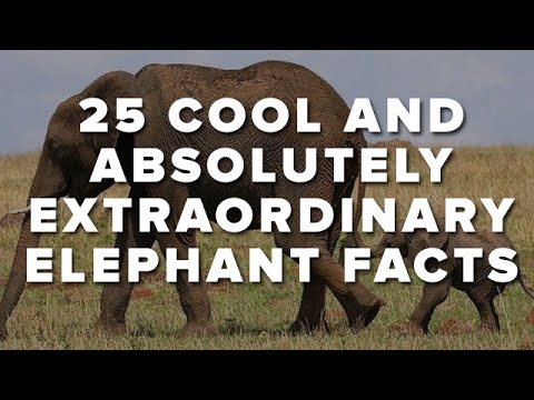 25 Cool And Absolutely Extraordinary Elephant Facts