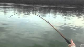 river donkey nickajack chattanooga tn