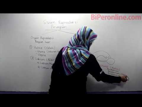 Sistem Reproduksi Manusia - Video Pembelajaran Biperonline.com