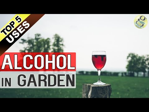 ALCOHOL IN GARDENING | Top 5 Uses of Alcohol in Garden Plants | Rubbing Alcohol Beer and Wine Hacks