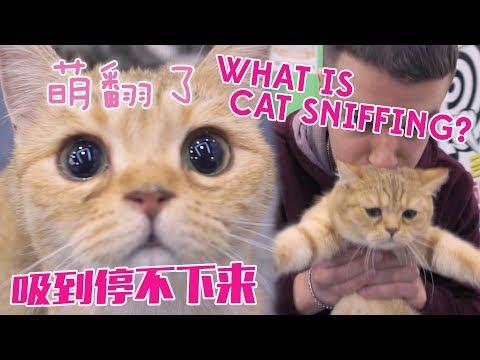 中国的吸猫现象 What is Cat Sniffing?