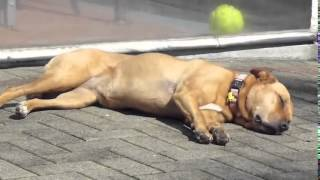 How Ho Stop Your Dog From Barking! Puppy Training