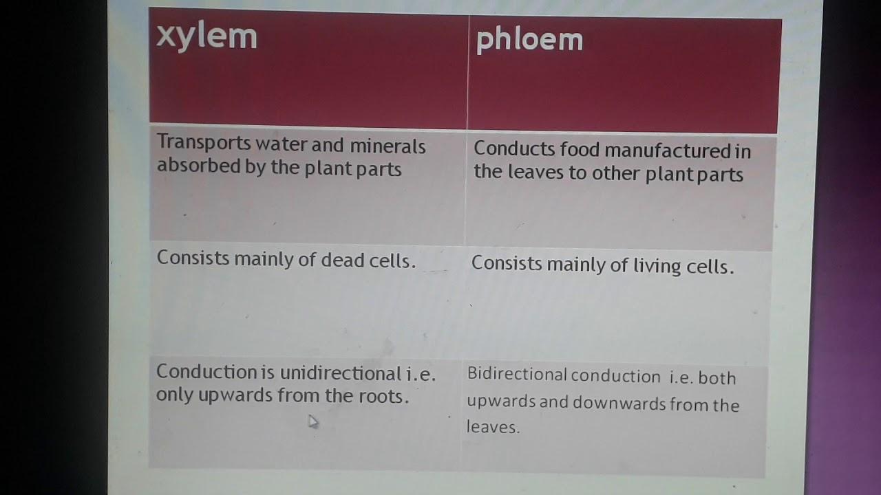 Std 7 biology Plant tissues xylem and phloem - YouTube