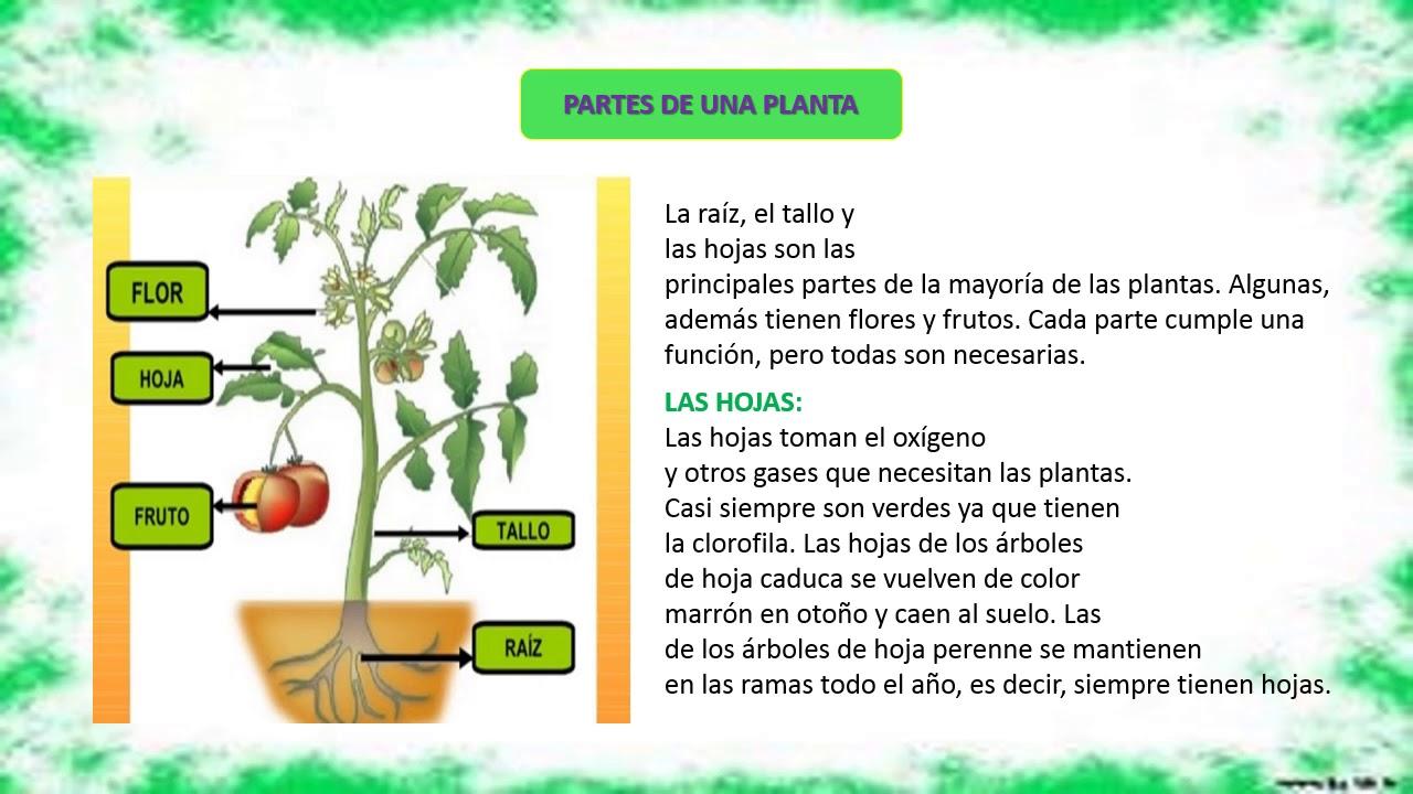 generalidades y anatomía de las plantas - YouTube