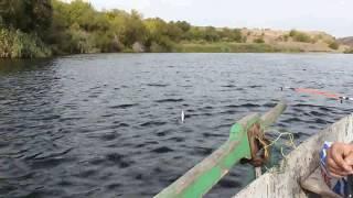 Рибалка,Миколаївська область,місто Южноукраїнськ,села Мар'ївка,річка Південний Буг.