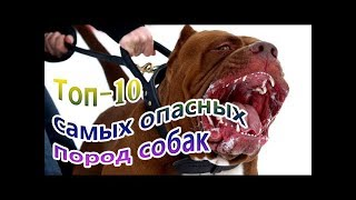 Топ  - 10 -  самых опасных пород собак