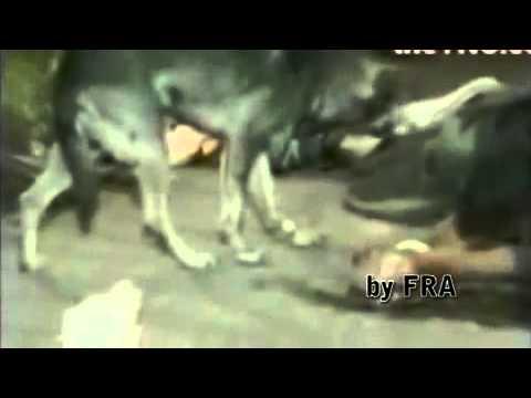 Cane che non abbandona il suo padrone morto.avi