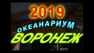 Воронеж Океанариум