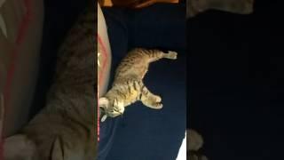 кот спит с открытыми глазами и бегает во сне !!!