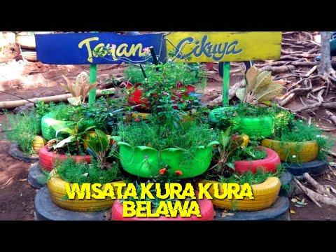 kura-kura-belawa-&-sejarah-cikuya-belawa,-cirebon-jawa-barat---indonesia