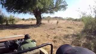 Safari en Afrique du Sud et au Botswana