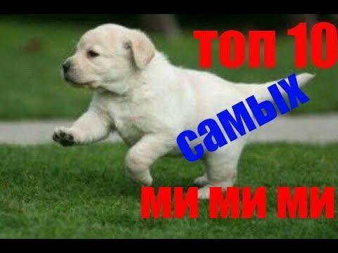 топ самых милых собак в мире