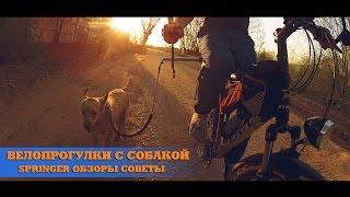 На велосипеде с собакой. Стрингер