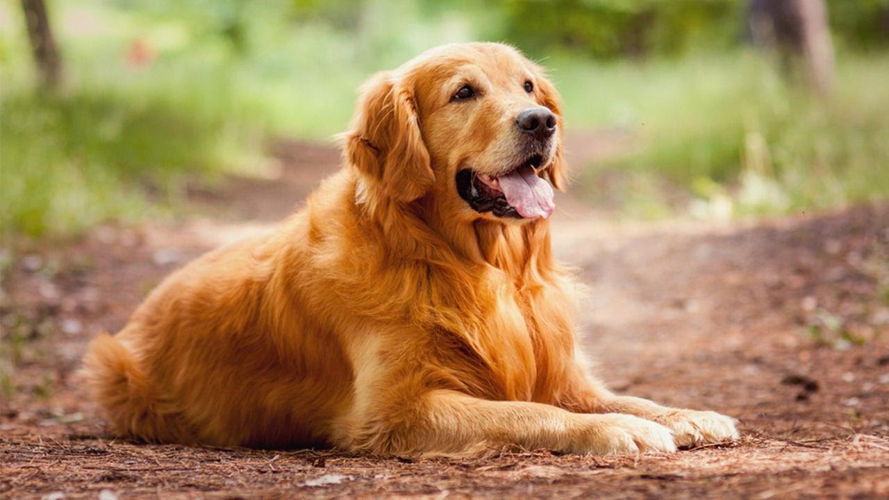 Pets: These Are the Top 10 Smartest Dog Breeds