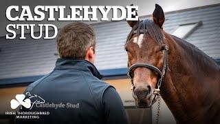 ITM Irish Stallion Showcase 2021 - Castlehyde Stud
