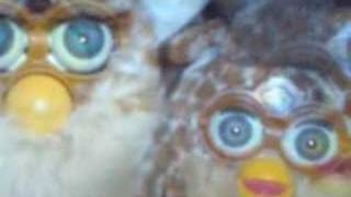 Prelude of Furby