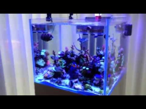 BasJacobs SPS Cube Amsterdam 50 gallon marine tank overview, almost 1 year!