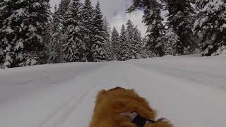 Ski Jouring/XC Skiing with dog-mounted Rylo