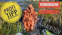 Drachenstein für das Aquarium vorbereiten - Profi Tipp