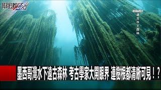 墨西哥灣水下遠古森林 考古學家大開眼界 連樹根都清晰可見!?王瑞德 傅鶴齡 馬西屏20161025-5關鍵時刻
