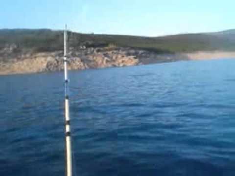Lov soma ,Bilecko jezero