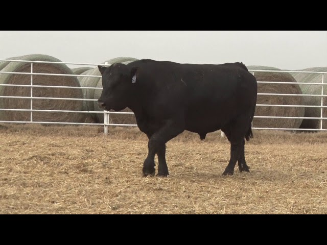 Express Ranches Lot 257