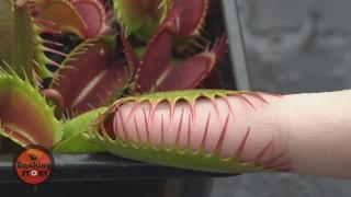 절대로 건들면 안되는 식물 10(곤충이)
