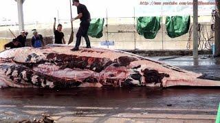 捕鯨 Dismantling of whale 鯨の解体 ★ 房総 和田漁港