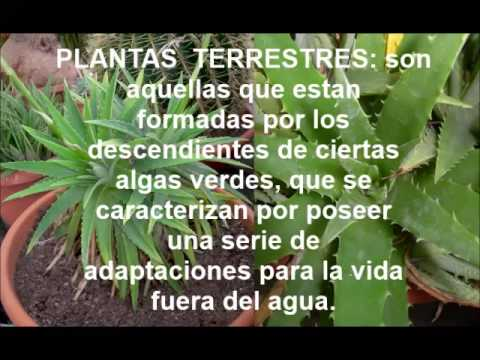 Plantas terrestres y acu ticas youtube for Que son plantas ornamentales ejemplos