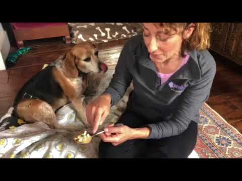 Pilling your dog. Tips from the vet to make medicating your pet easier.