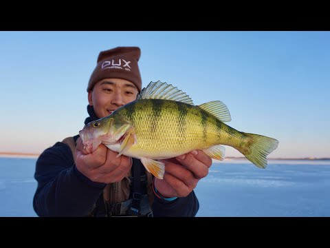 Early Ice Fishing JUMBO PERCH! (CATCH CLEAN COOK)
