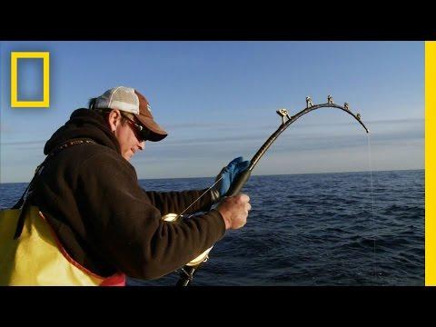 Biggest Fish of the Year   Wicked Tuna