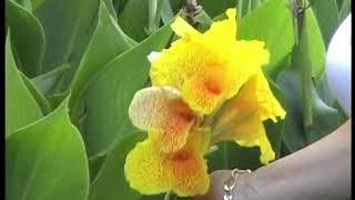 видео куба 2009. туры на кубу. отдых куба. курорты кубы. валюта кубы. климат куба. кубинская кухня.