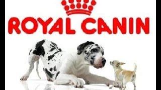 роял канин корм для собак Royal Canin