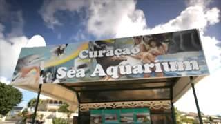 Curacao Sea Aquarium Park