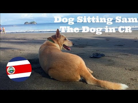 Dog Sitting in Costa Rica |Day in my Life