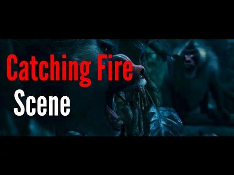 Catching Fire Scenes - Monkey Mutts