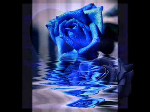 A rosa azul