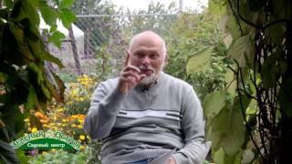 видео обрезка колоновидной груши