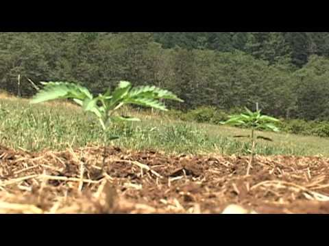 Future of industrial hemp farming uncertain