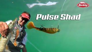 Pulse Shad
