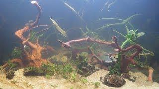 аквариум на 350 литров запущен! Первые дни жизни