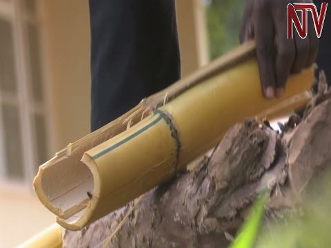 Makerere researchers distill bamboo stems to extract versatile wood vinegar
