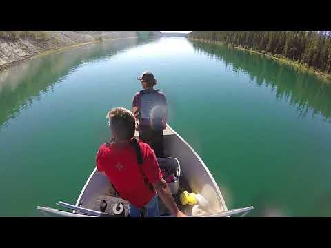 Assessing the Fate of Yukon Chinook Salmon