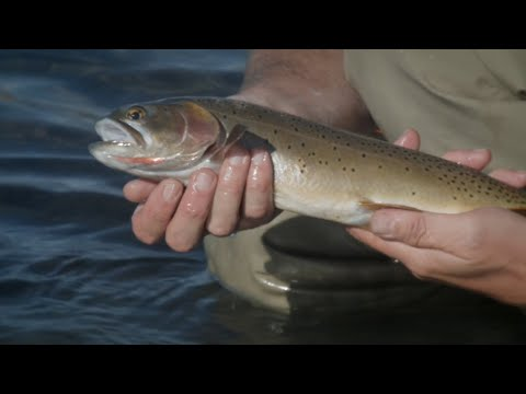Slough Creek-Backpacking And Fly Fishing