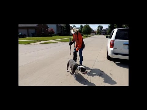 Pit Bull won't Walk on Leash - EP 11 DOG INTERVENTION - Dog Whisperer BIG CHUCK MCBRIDE