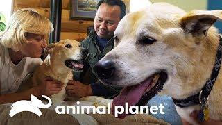 ¡La mascota de la doctora Dee puede tener un tumor! | Dra. Dee: Veterinaria de Alaska |Animal Planet